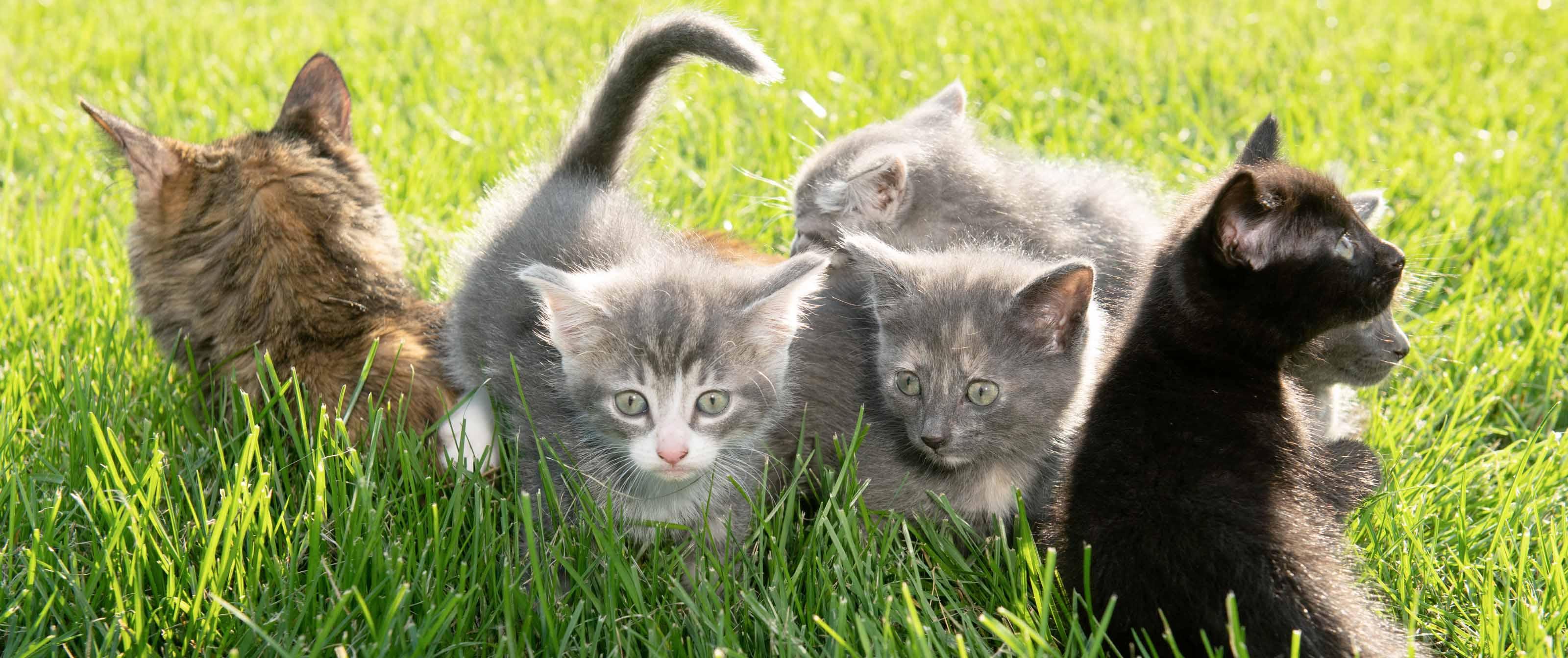 Header image of animals.